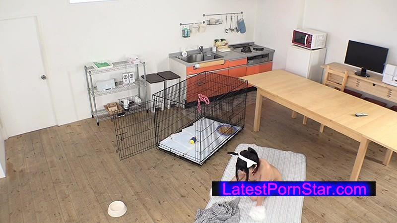 [SVDVD-487] ある日突然、姉が犬になってしまった!しょうがないからペットとして世話をしていたら、急に発情!まさかの近親相姦!